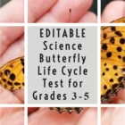 Butterfly Life Cycle Test