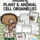 CELLS &quot;Super Cell&quot; Project - Structures and Functions of P