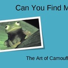 Camouflage: Can you find me? Powerpoint