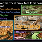 Animal Adaptations Lesson, Camouflage and Mimicry