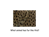 Can You Guess the Zoo Animals?