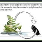 Carbon Cycle PowerPoint - Photosynthesis / Respiration 300 Slides