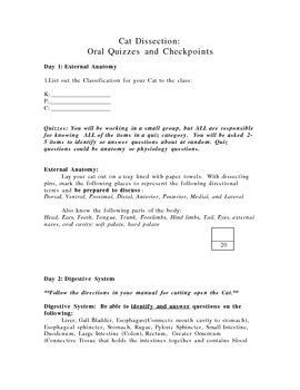 Cat Dissection quiz sheet