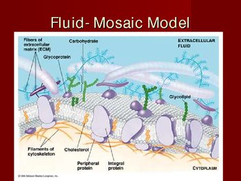 Cell Membrane and Cell Transport Powerpoint