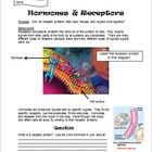 Cell receptors, hormones, and homeostasis activity