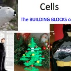 Cells are the Building Blocks of Life - Lesson Presentatio