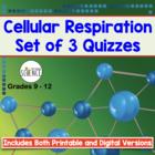 Cellular Respiration Quizzes - Set of 3