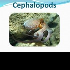 Cephalopods - Marine Life Vol. 3 - Slideshow Powerpoint Pr