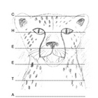 Cheetah Acrostic Poem Template with Original Artwork