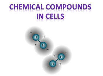 Chemical Composition in Cells (Molecules of Life)