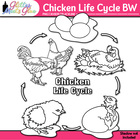 Chicken Life Cycle Clip Art [LINE ART]