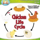 Chicken Life Cycle Clipart Set — Comes In Color and Black