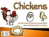 Chickens ~ An Interactive PowerPoint Presentation of Their