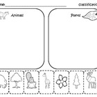 Classify and Categorize for Kindergarten