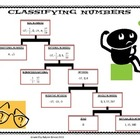 Classifying Numbers Graphic Organizer