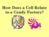 Comparing Cell Organelles to Candy Factory Analogy Hands-o