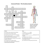 Crossword Puzzle - Circulatory System