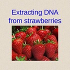 DNA Extraction from Strawberries