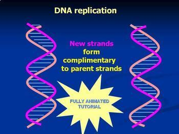 DNA structure powerpoint animation of DNA structure and re