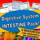 Digestive System Intestine Pack!
