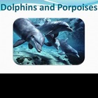 Dolphins - Marine Life Vol. 8 - Slideshow Powerpoint Presentation