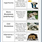 Ecology and the Environment Flash Card Pack