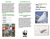 Endangered Species Brochure Project (Microsoft Publisher)