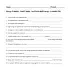 Energy Transfer, Food Chains, Food Webs and Energy Pyramids HW