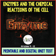 Enzymes, Catalysts, Chemical Reactions of Cells Quiz / Test