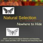 Evolution Natural Selection Peppered Moths (2)