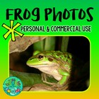 FROG Photos! Green & Golden Bell Frog FREEBIE