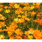 Fall Flowers Photo Pack