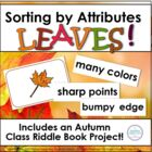 Fall Leaves: Lessons &amp; Materials for Attribute Sorting &amp; A