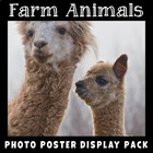 Farm Animals Photo Pack