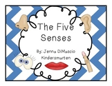 Five Senses Interactive Mini Unit