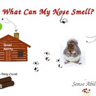 Five Senses - Smell - Multi-Level Books, Lesson Plan and