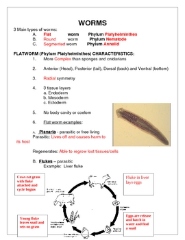 Flatworm Student Notes (Phylum Platyhelminthes)