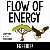 Flow of Energy Unit: Food Chains, Food Webs, Producers, Co