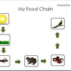 Food Chain Activity Printable