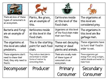 Food Chain Sort Packet
