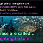 Food Webs Predator Prey (850 Slides) HW, Class Simulation,