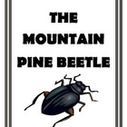 Forests in Crisis The Mountain Pine Beetle