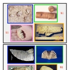 Fossils Identification 1 SURFFDOGGY