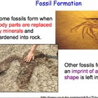 Fossils & Paleontology - 2 Lesson Presentations, Lab, Comp