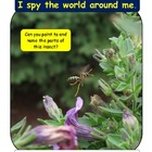 Free activity: Insect Parts &quot;I Spy&quot;: Used as 1st grade assessment
