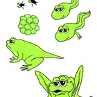 Frog Life Cycle Art & Illustrations