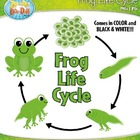 Frog Life Cycle Clipart Set  Comes In Color and Black &amp; White!