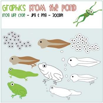 Frog Life Cycle Sequence Graphics - Color + Line Art