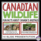 Fun Presentation on Canadian Animals/Wildlife