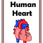Games and Activities for the Human Heart